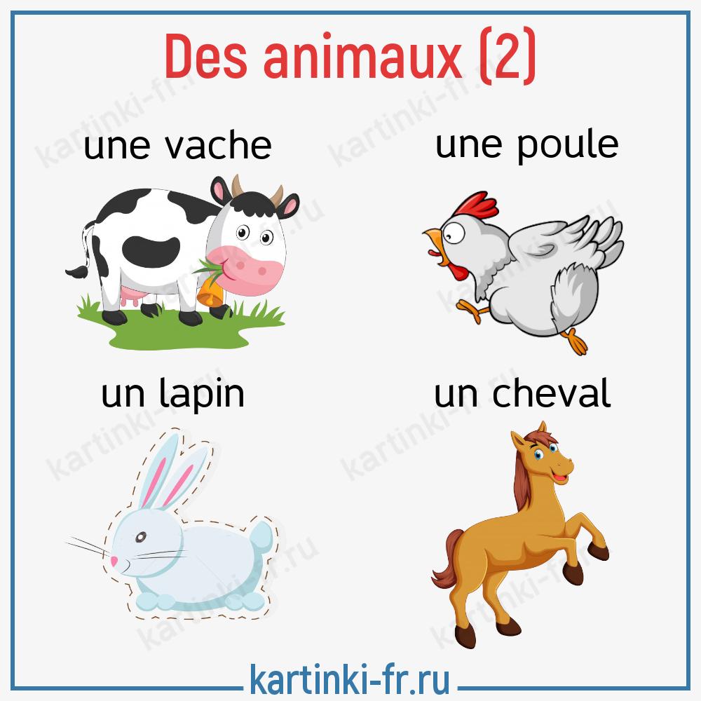 Животные на французском языке часть 2